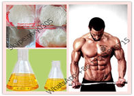 USP Standard White Powder Androstenediol  521-17-5 M1, 4ADD Powerful Muscle Building Steroids